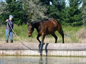 Lunging a horse down a water jump bank