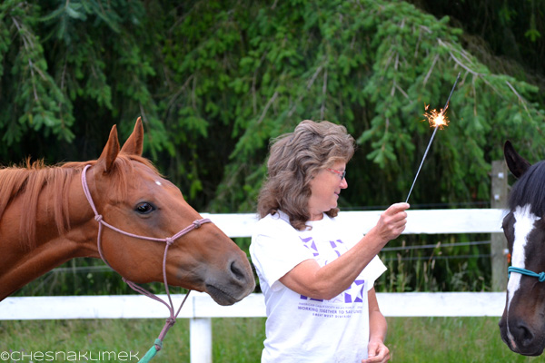 Horse interested in a woman with a sparkler