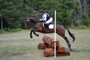 Horse jumping a log