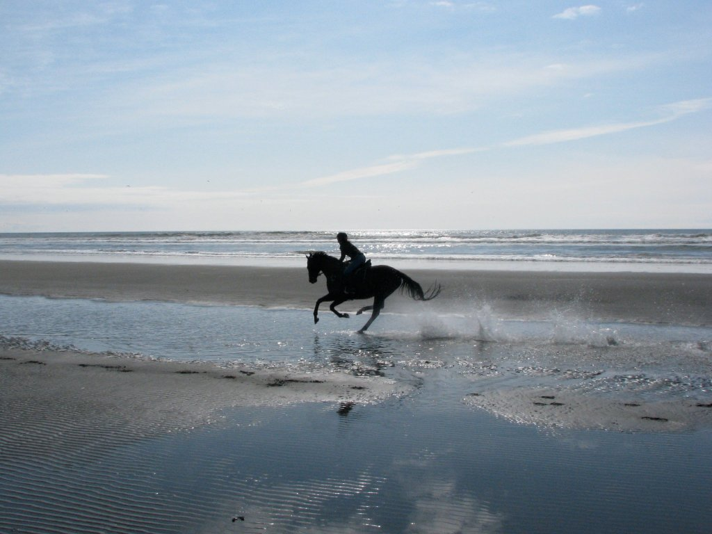 Galloping at the beach