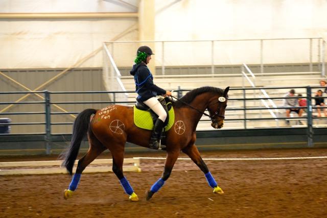 Seahawks Horse