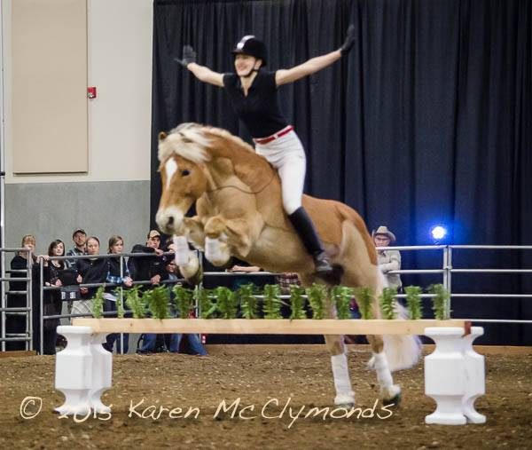 Haflinger jumping without a bridle