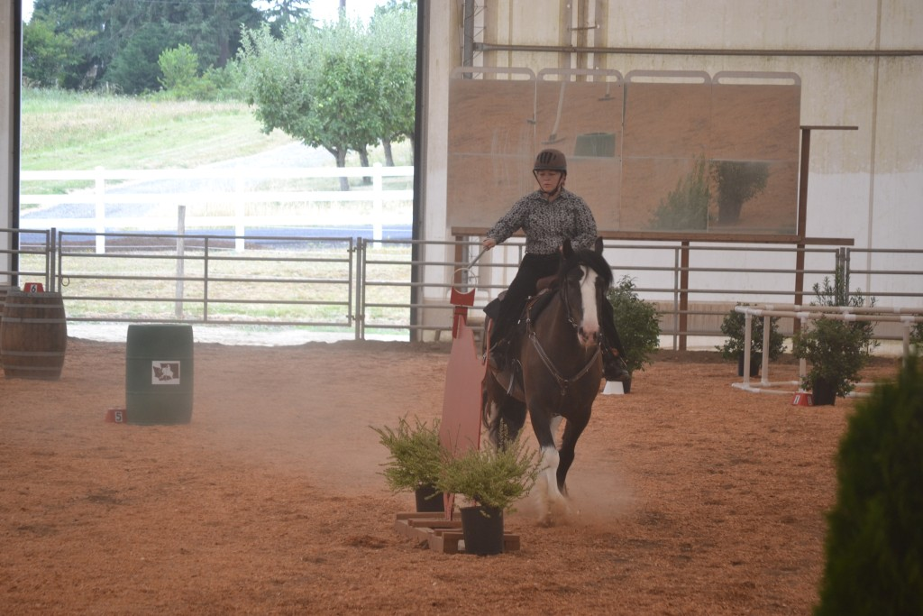 Draft horse competing in working equitation