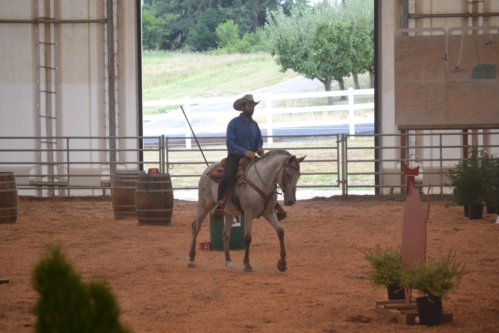 Appaloosa competing in Working Equitation