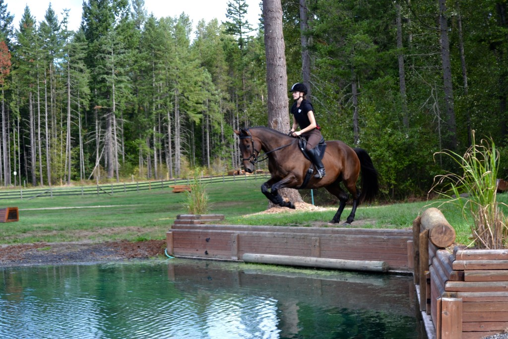 Horse jumping into water