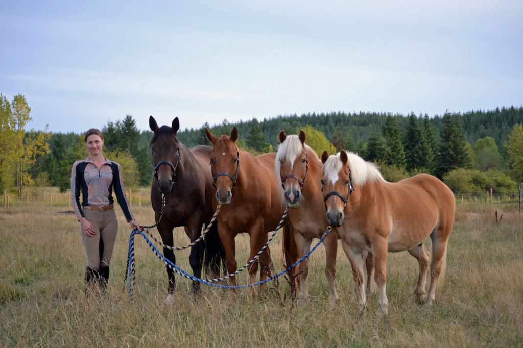 Four horses standing together in a line