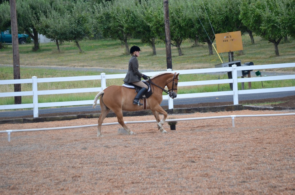 Haflinger competing at Working Equitation