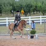 Haflinger competing at Working Equitation dressage phase