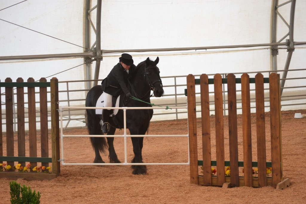 Friesian horse competing in working equitation