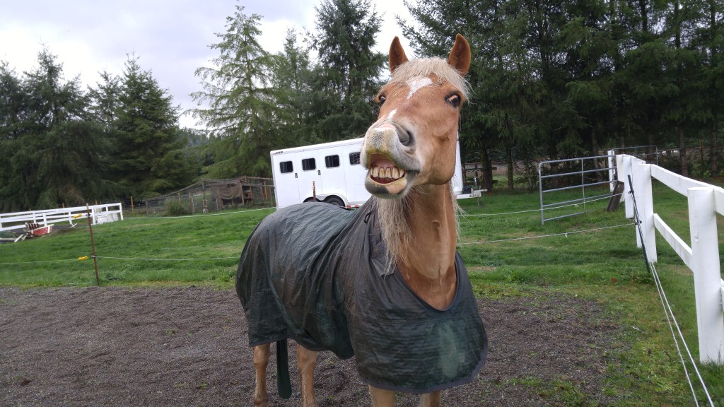 Dirty pony smiling