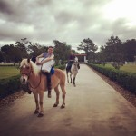 Riding horses out of Haras Cup