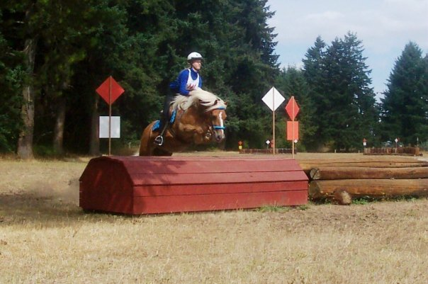 Haflinger horse jumping cross-country