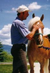 Man and Haflinger horse