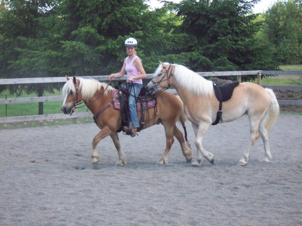 Haflinger horses riding together