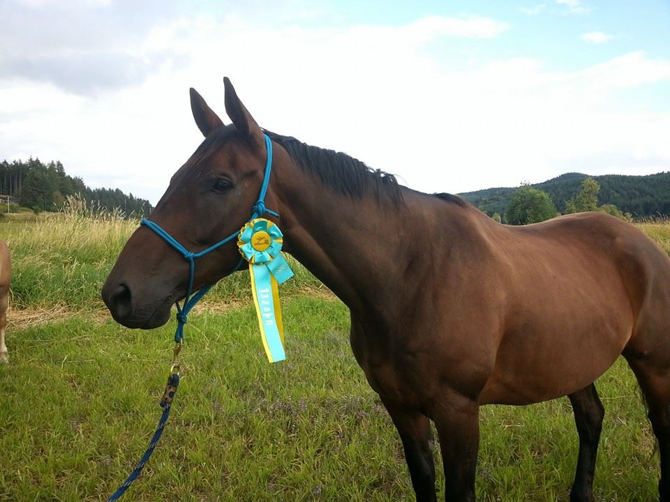 Horse with third place ribbon